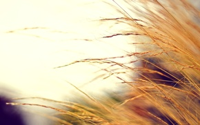 Picture autumn, color, macro, photo, background, Wallpaper, plant, blur, wallpapers, dry