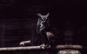 Wallpaper owl, bird, twilight, owl