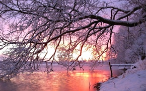 Picture winter, snow, sunset, river, tree