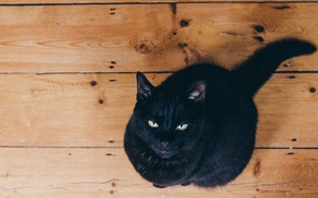 Picture wood, eyes, cat