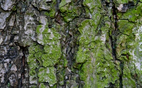 Picture green, pattern, Moss, bark