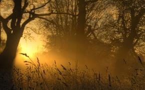 Picture light, golden, grass, nature, evening