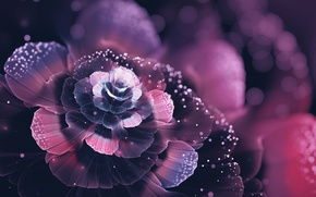 Picture flower, abstraction, beauty, petals