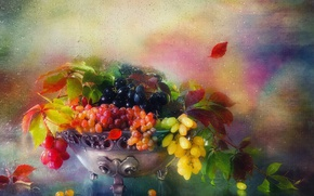 Picture leaves, water, drops, branches, berries, grapes, vase, still life