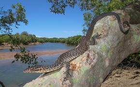 Picture landscape, nature, lizard