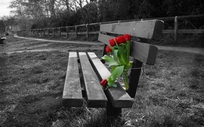 Picture flowers, background, tulips, bench