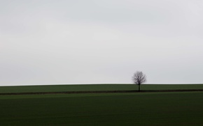 Picture field, tree, countryside, cloudy
