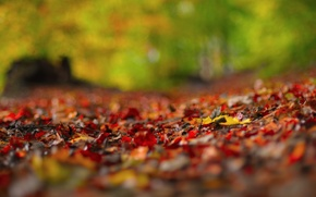 Wallpaper autumn, macro, glare, foliage, razmytost