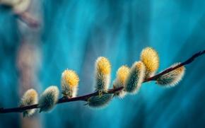 Wallpaper nature, branch, spring