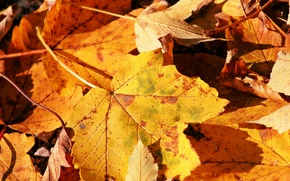 Picture autumn, nature, sheet, macro photo
