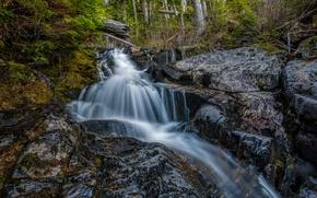 Picture forest, trees, stream, stones, waterfall, CA, USA, San Juan Ridge Creek