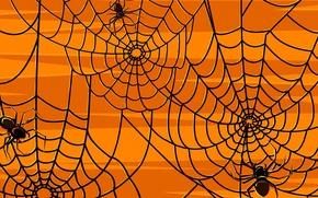 Picture mesh, pattern, web, spider, insect