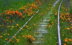 Wallpaper summer, flowers, nature, railroad
