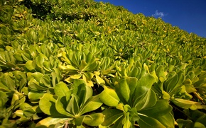 Picture the sky, leaves, plant, slope