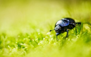 Picture grass, macro, background, Beetle