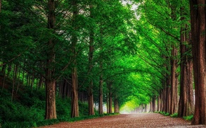Picture road, forest, landscape, nature