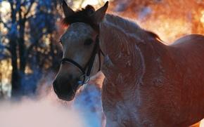Wallpaper animals, horse, horse