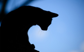Picture cat, background, the evening, silhouette