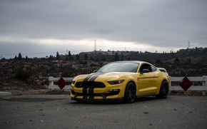 Picture Mustang, Ford, Shelby, Yellow, GT350R, 2016