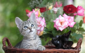 Picture cats, flowers, basket