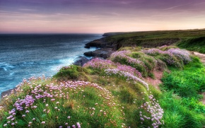 Picture sea, flowers, nature, coast