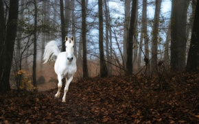 Picture forest, fog, unicorn
