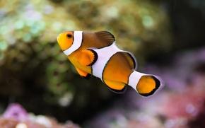 Picture color, macro, aquarium, fish, underwater world, under water, striped, motley