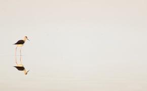 Wallpaper water, nature, bird, minimalism