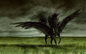 Wallpaper field, horse, wings, Black