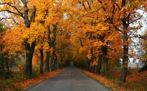 Picture road, autumn, landscape