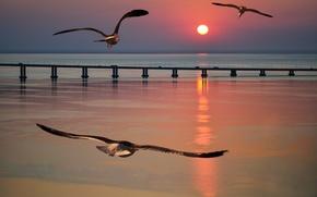 Wallpaper sea, seagulls, bridge, flight, sunset