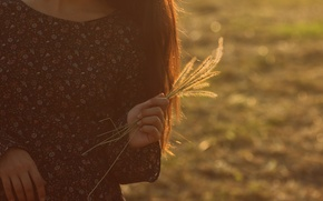 Picture girl, dress, spikelets, bokeh