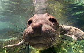 Picture Mexico, Baja California, Elephant Seal