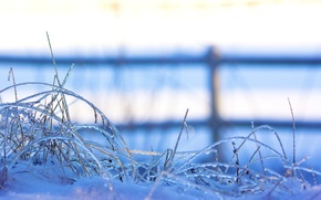 Wallpaper winter, grass, snow, nature, the fence, ice, the fence, grass, macro., freezing, frozen