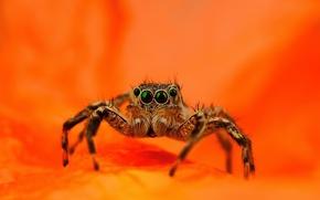 Picture spider, orange background, jumper, jumper