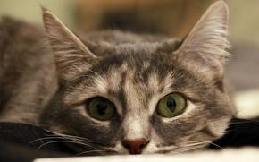 Picture Cat, Cats, cat, Plush