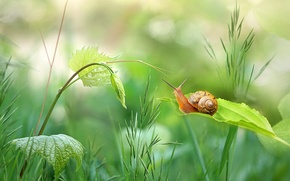 Wallpaper greens, grass, leaves, snail, stem, bokeh