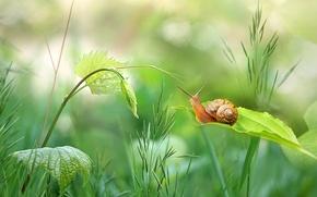 Wallpaper greens, grass, leaves, snail, stem, bokeh