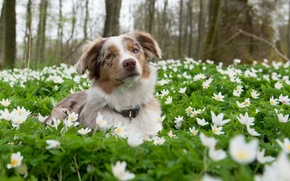 Picture look, flowers, nature, each, dog