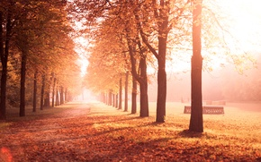 Picture road, autumn, leaves, trees, nature, Park, yellow, alley