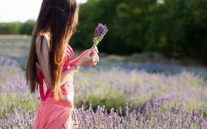 Picture summer, flowers, girl, field