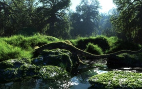 Picture forest, water, nature, river, moss, art, log, river, Sunny, klontak