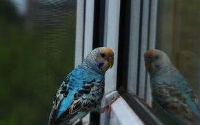 Picture animals, birds, bird