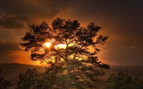 Picture the sun, sunset, tree
