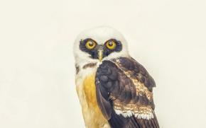 Picture eyes, owl, beak, direct look