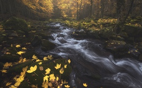Picture autumn, forest, trees, nature, river, foliage, stream