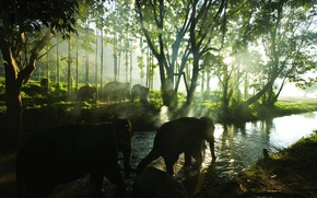 Picture forest, the sun, rays, tropics, elephant