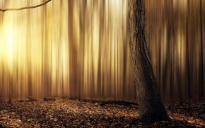 Picture abstract, forest, yellow, tree, leafs, sun, warm