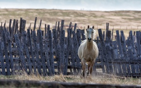 Picture background, horse, the fence