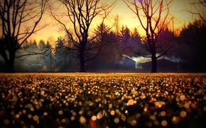 Picture autumn, trees, nature, glare, Wallpaper, home, blur, horizon, wallpapers, bokeh